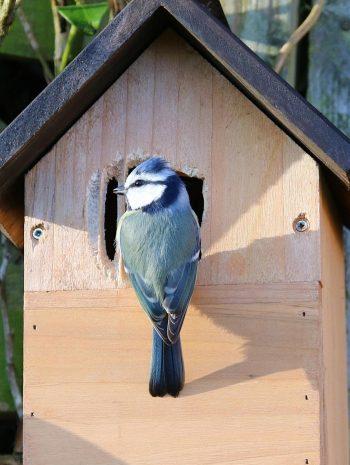ateliers-des-petits-curieux-avec-le-cpie-pays-gersois-brr-ou-sont-les-oiseaux-1.jpg