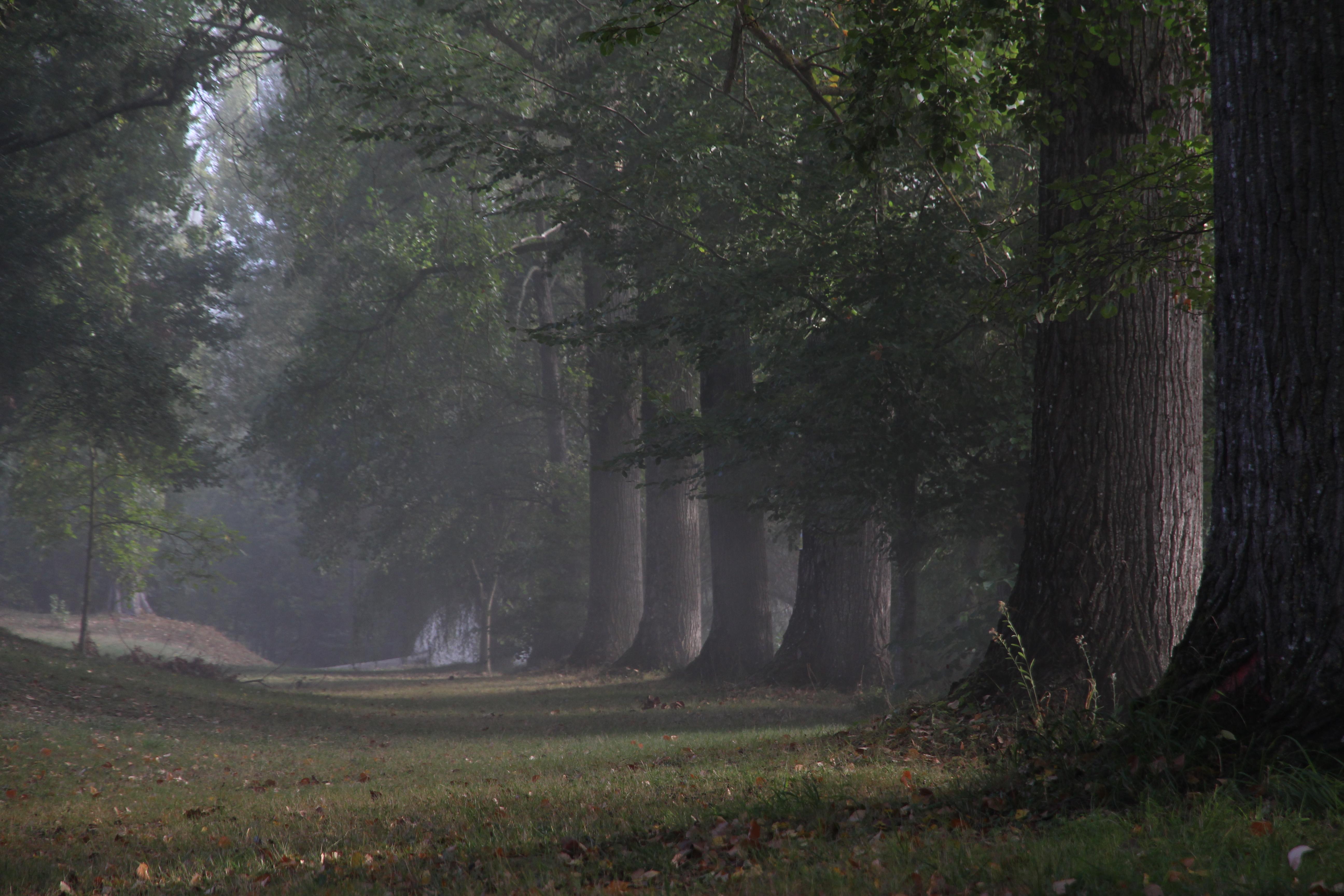 camping-ile-du-pont-1 (7)