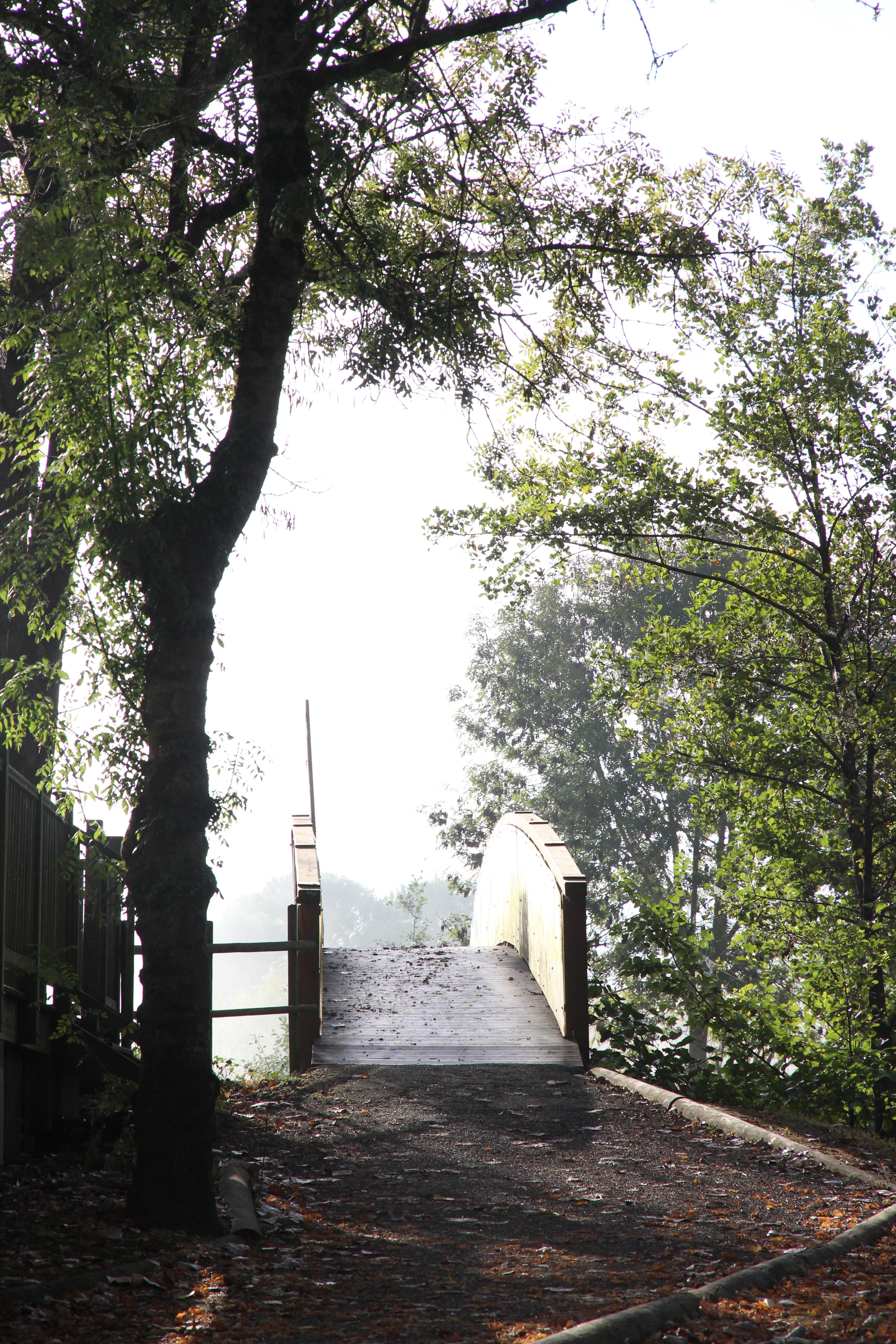 camping-ile-du-pont